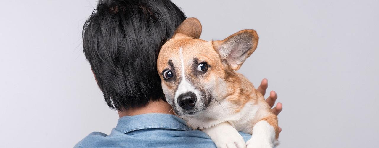 Mann mit ängstlichem Hund auf dem Arm