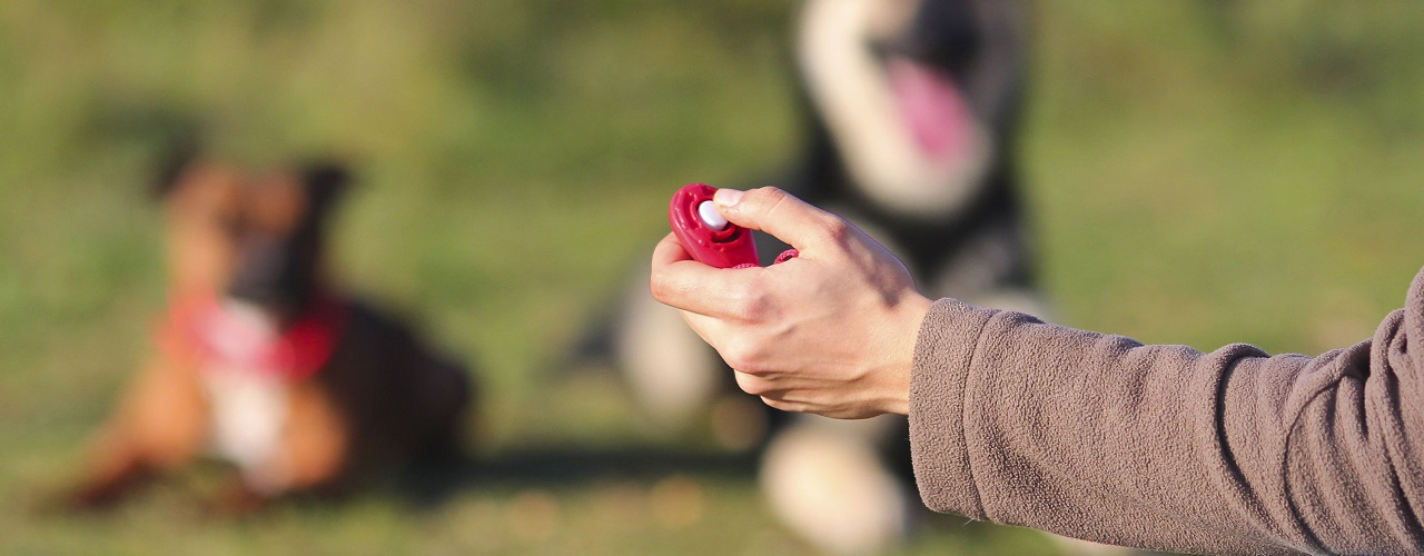 Mann mit Hund beim Clickertraining