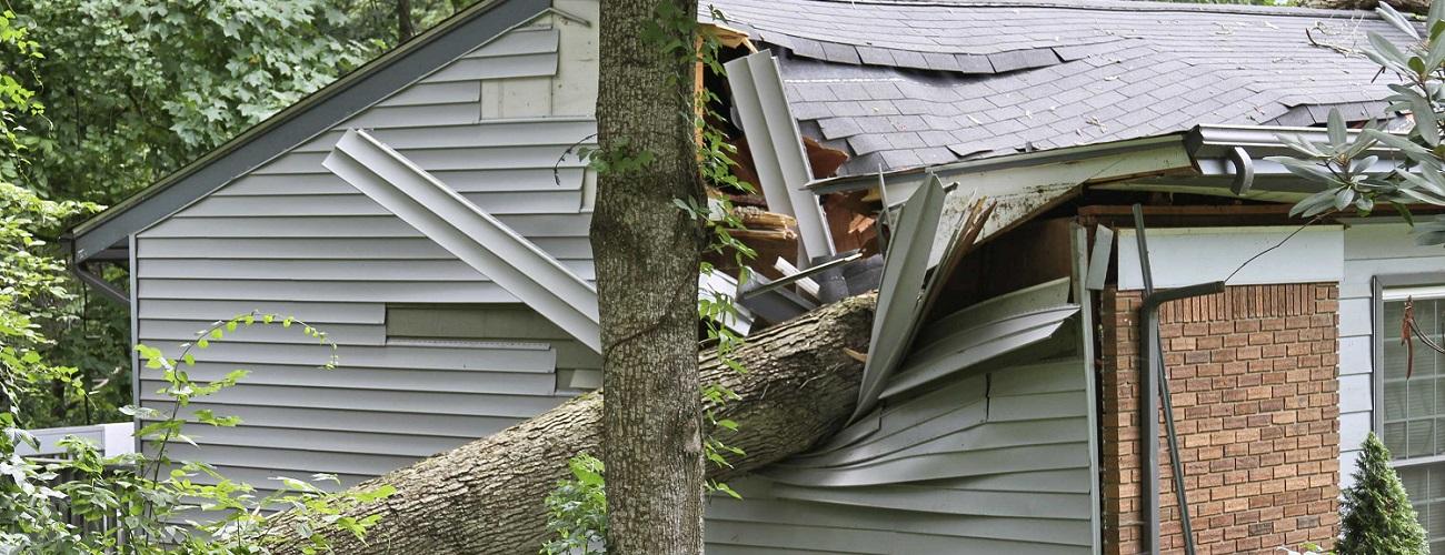 Baum ist auf Haus gefallen