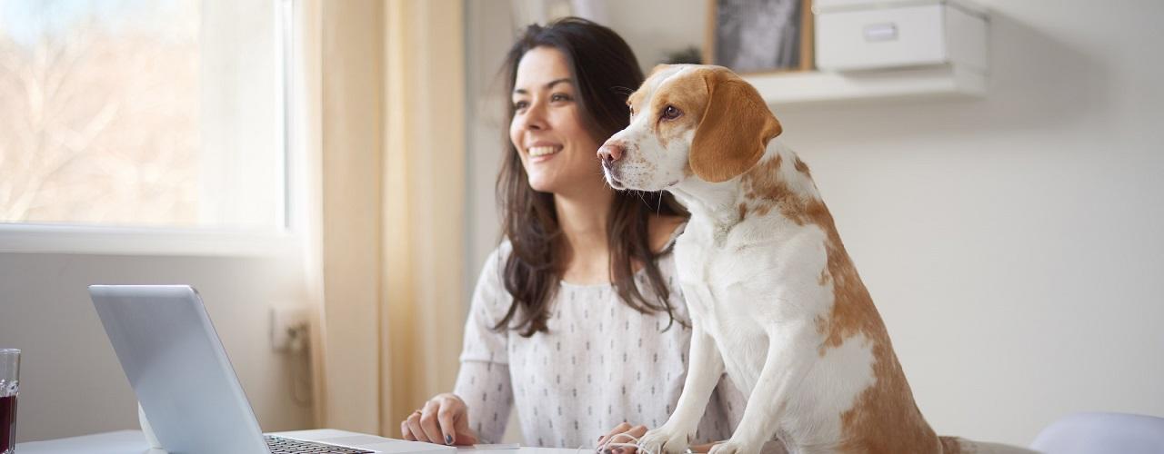 Frau und Hund sitzen am Schreibtisch vor dem Laptop