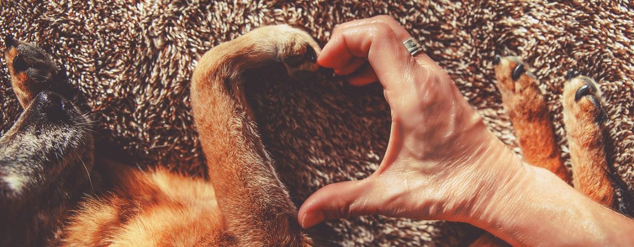Hundepfote und Hand eines Menschen formen ein Herz