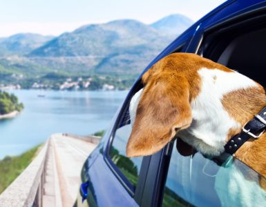 Urlaub mit Hund im Ausland: Hund blickt aus dem Autofenster auf einen See