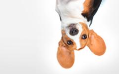 Hundehalterhaftpflichtversicherung der IDEAL