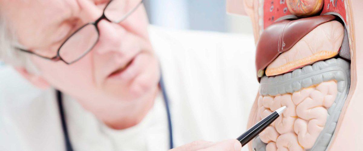 Arzt mit einem Schaumodell des menschlichen Darms