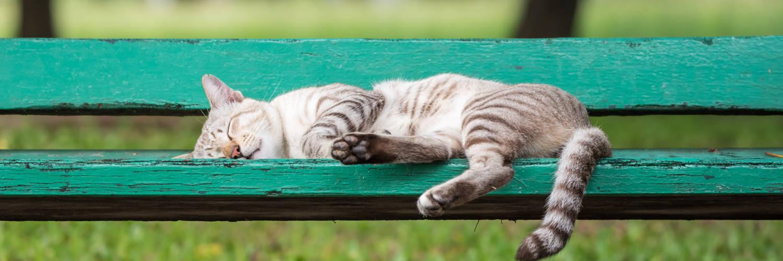 Zum Welt-Faulpelz-Tag: Katze schläft auf einer Parkbank