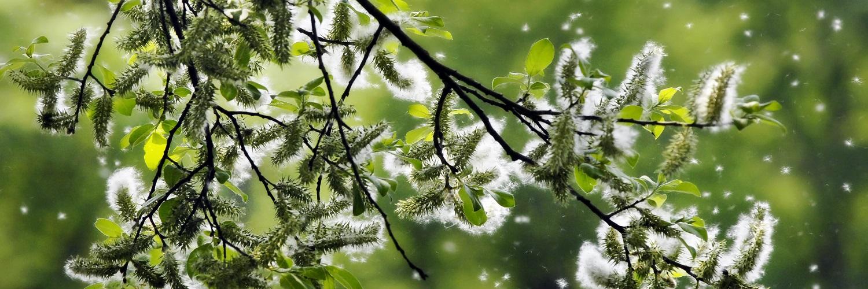 Pollenflug in der Natur