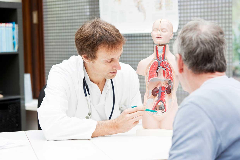 Arzt klärt über Prostatakrebs an Hand eines Modells auf